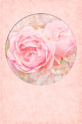 Gift Greeting Cards Posters - Rose Garden Poster by Viaina