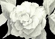 Full Bloom Mixed Media Acrylic Prints - Rose in Gray and White Acrylic Print by Helena Tiainen