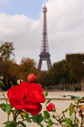 Puddle Iron Acrylic Prints - Rose in Paris Acrylic Print by Charel Schreuder