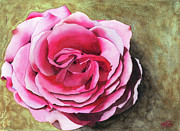 Rose Metal Prints - Rose Metal Print by Ken Powers