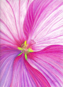 Oil Pastel Prints Pastels Posters - Rose Mallow Poster by Amy Tyler
