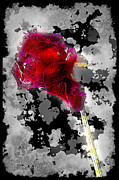 Abstract Digital Pyrography - Rose by Mauro Celotti