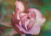 Deborah Benoit - Rose of Romance