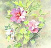 Floral Notecards Posters - Rose of Sharon Poster by Vikki Bouffard