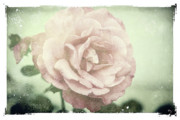 Floral Greeting Card Posters - Rose of victorian moments Poster by Toni Hopper
