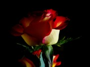 Rose Flower Greeting Cards Photos - Rose on Black by ShaddowCat Arts - Sherry