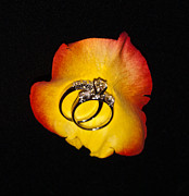 Bands Prints - Rose Petal and Wedding Bands 2 Print by Douglas Barnett