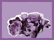 Abstract Roses Posters - Rose Petals in Purple Poster by Marsha Heiken