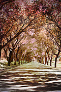 Autumn Photographs Framed Prints - Rose Road Framed Print by Andrea Hazel Ihlefeld