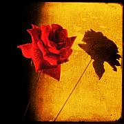 Sonia Stewart - Rose Shadow on my Wall