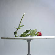 With Love Photo Framed Prints - Rose with a broken stem on a table. Framed Print by Bernard Jaubert