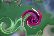 Digitally Altered Floral Posters - Rosebud Swirls Poster by Teresa Blanton
