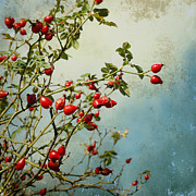 Dogrose Photos - Rosehips by Iris Lehnhardt