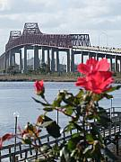 Florida Bridge Photo Originals - Roses at the Matthews Bridge Jacksonville Fl by Warren Thompson