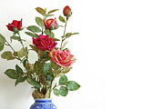 Roses Bouquet Print by Carlos Caetano