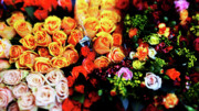 Multicolored Roses Prints - Roses bouquet Print by Ofer Zilberstein