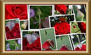 Apology Framed Prints - Roses collage Framed Print by Sherry Gombert