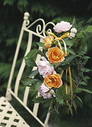 Outdoor Still Life Art - Roses by Erika Craddock