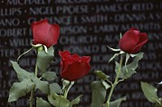 War Monuments And Shrines Prints - Roses Glow Against The Black Granite Print by Karen Kasmauski