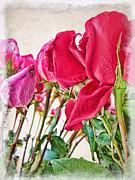 Roses In White Print by Joan  Minchak