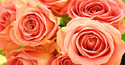 Rose Art - Roses by Kristin Kreet