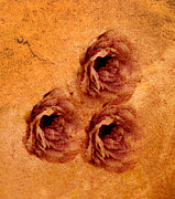 Texture Flower Prints - Roses Print by Paul St George