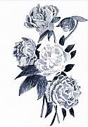 Robbi Musser Drawings - Roses by Robbi  Musser