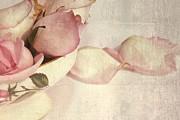 Roses Print by Sophie Vigneault
