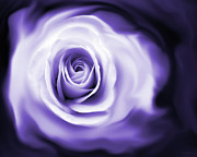 Abstract Roses Posters - Roses Whisper Purple Poster by Jennie Marie Schell