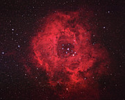 Nebula Photos - Rosette Nebula by Pat Gaines