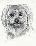 Yorkshire Drawings - Rosie by Tim Thorpe