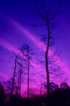 Winter Trees Art - Rosy Fingers of Dawn by Gerard Fritz