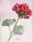 Red Geranium Framed Prints - Rosy Red Geranium Framed Print by Pat Yager