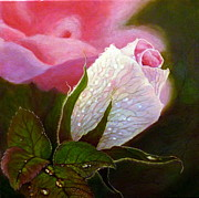 Shirley Oxborough - Rosy