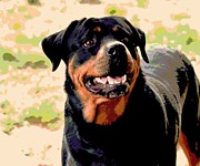 Funny Dog Mixed Media - Rottie by Dorrie Pelzer