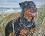 Dog Breeds R-s - Rottweiler Beach by L A Shepard