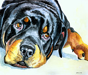 Akc Painting Framed Prints - Rottweiler Framed Print by Lyn Cook