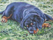Dog Breeds R-s - Rottweiler Puppy by Lee Ann Shepard