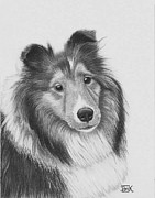 Collie Drawings Framed Prints - Rough Collie Framed Print by AniK