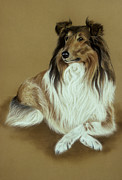 Pair Pastels Framed Prints - Rough Collie Framed Print by Patricia Ivy