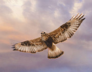 Hawk Pyrography - Rough legged Hawk by David Martorelli