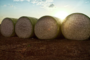 Field. Cloud Posters - Round Bales Of Picked Cotton Poster by Avi Morag photography