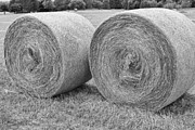 Black And White Prints Prints - Round Hay Bales Black and White  Print by James Bo Insogna