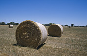 Hay Bales Posters - Round Hay Bales In A Farm Field Poster by Jason Edwards