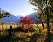 Owens Valley Art - Round Valley Red Tree by Tina Slee