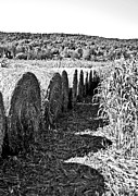 Haybale Photo Prints - Row Print by Kyra Wilson