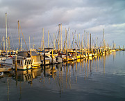 Docked Sailboats Prints - Row of Boats Anchored in Marina Print by David Buffington