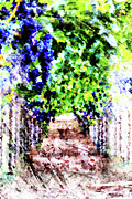 Grape Vine Prints - Row of Grapes Print by Andrea Barbieri