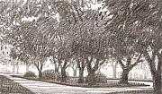 Oak Drawings Prints - Row of Oaks Sketch 2 Print by Kevin Lawrence Leveque