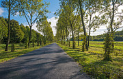 Flevoland Framed Prints - Row of trees along a road in sunlight Framed Print by Jan Marijs